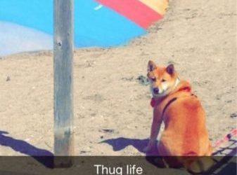 Que no están permitidos los perros en este parque? Mira lo que me afecta…
