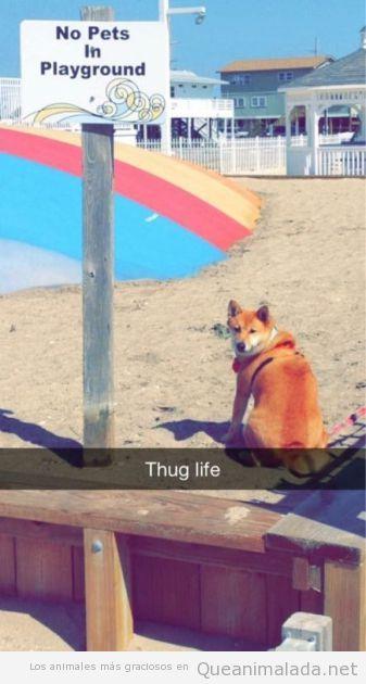 Foto graciosa de un perro en un parque