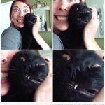 Cada vez que intentas hacerte un selfie con tu gato...