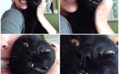 Cada vez que intentas hacerte un selfie con tu gato…