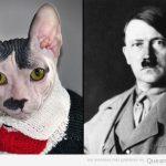 A ver, a ver, este gato sphynx se parece peligrosamente a Hitler