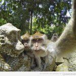 Simios de turismo y haciéndose selfies con estatuas…