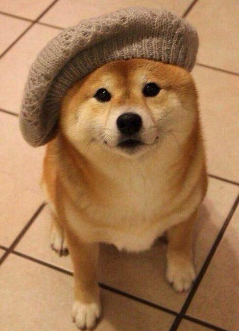 El perro con boina ladeada más estiloso jamás visto!