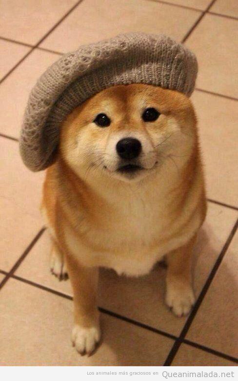 Perro con boina ladeada