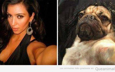 Cuando tu carlino quiere hacerse la Kim Kardashian…