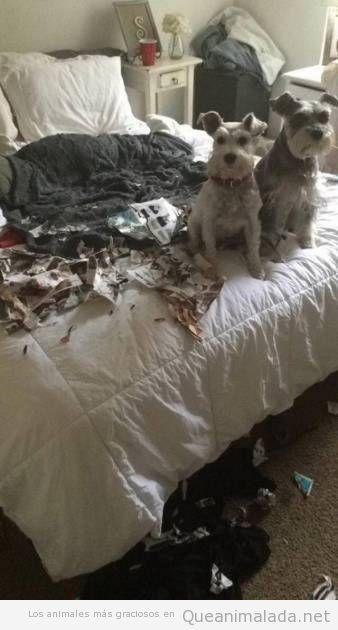 Han entrado los ladrones, nosotros no hemos hecho nada, lo juramos por Snoopy