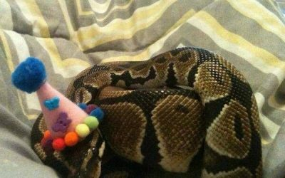 Cuando es el cumpleaños de tu serpiente y te vienes arriba!