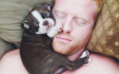 Dormir la siesta con un cachorro de bulldog francés en la cara: sí, por favor!