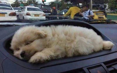 Más bonito que un cachorrito de perro en el salpicadero de un coche