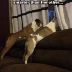 Ese momento cuando te das cuenta de que uno de tus perros es más listo que el otro...