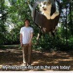 Cuando llevas a tu gato al parque y se sube a un columpio…