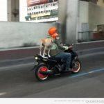 Cuando vaya sen moto, ponte casco (aunque seas un perro)