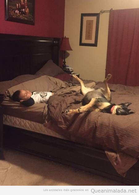 Durmiendo en la cama con el perro a pierna suelta…