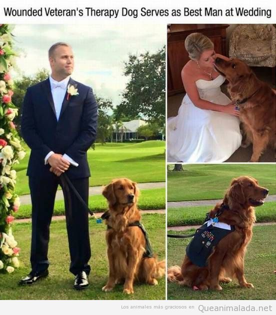 Un perro como padrino de tu boda… qué bonitooo