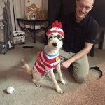 Es difícil resistirse a disfrazar a tu perro de Wally