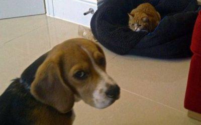 Mamá, el gato está durmiendo en mi cama…