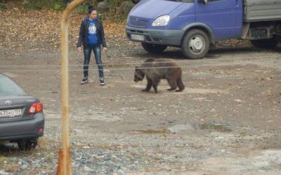 Las mascotas en Rusia son un poco diferentes… muy WTF