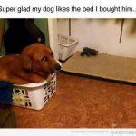 La cama favorita de mi perro…
