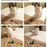 A ver si pillas la indirecta: tu gato quiere jugar contigo