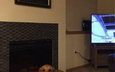 Un perro con nivelazo tiene que tener un retrato encima de la chimenea…
