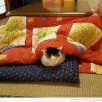 Con más sueño que un gato debajo de una mesa camilla japonesa..