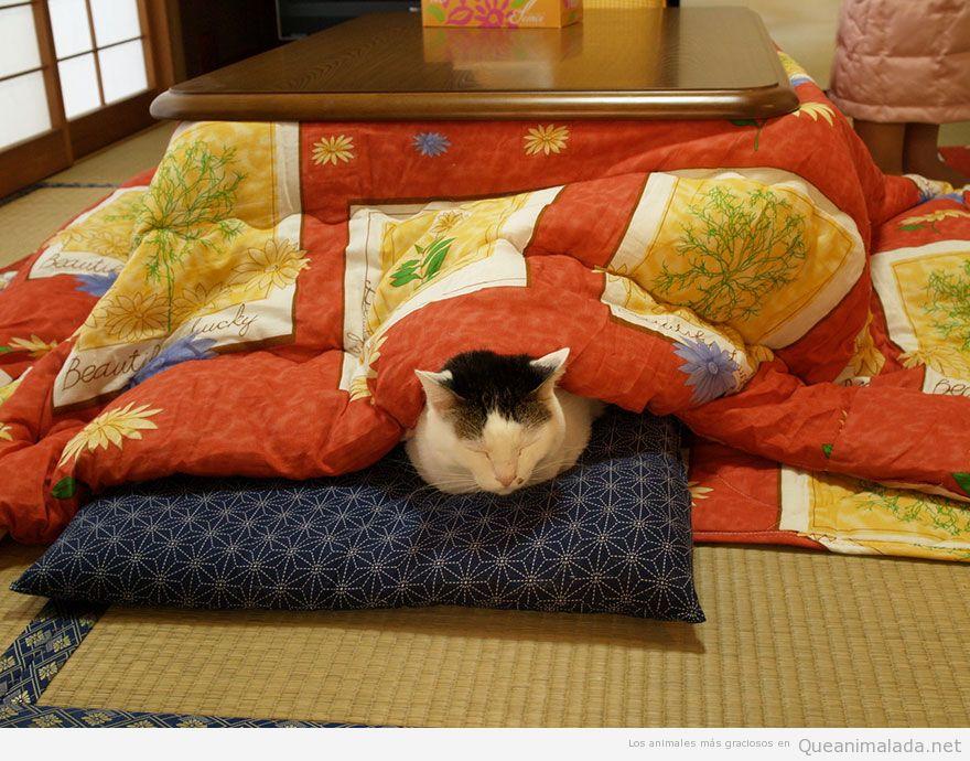 Kotatsu mesa japonesa con gato durmiendo