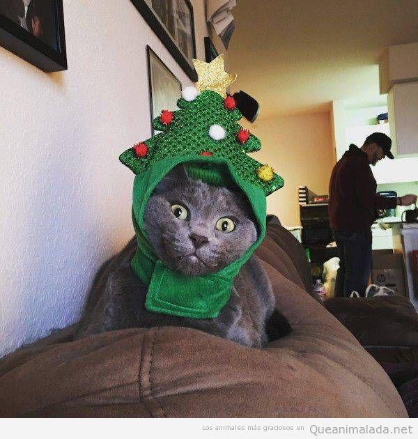 A este gato la Navidad le ha pillado por sorpresa!