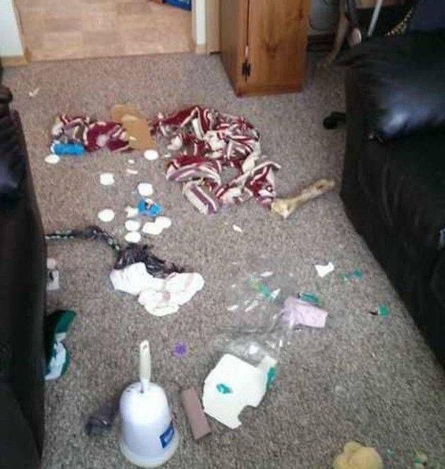 Adivina quién es el culpable de este destrozo en casa…