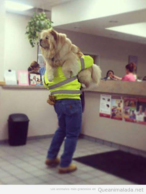 Cuando te llevan a rastras al veterinario o al dietista a principios de enero…