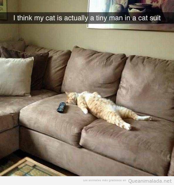 Creo que mi gato es en realidad un hombre diminuto en un traje de gato