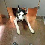Lo típico que estás en un baño público  y te aparece un husky por debajo de la puerta…
