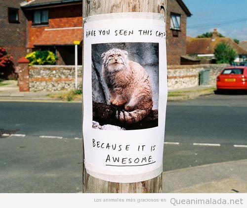 Fotos y memes graciosos de el gato montés 2