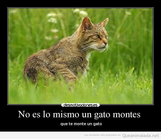 Los memes y fotos más divertidas de gatos monteses