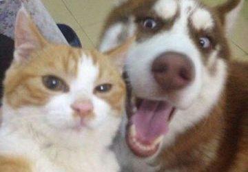 Un perro y un gato se hacen un selfie y lo clavan!