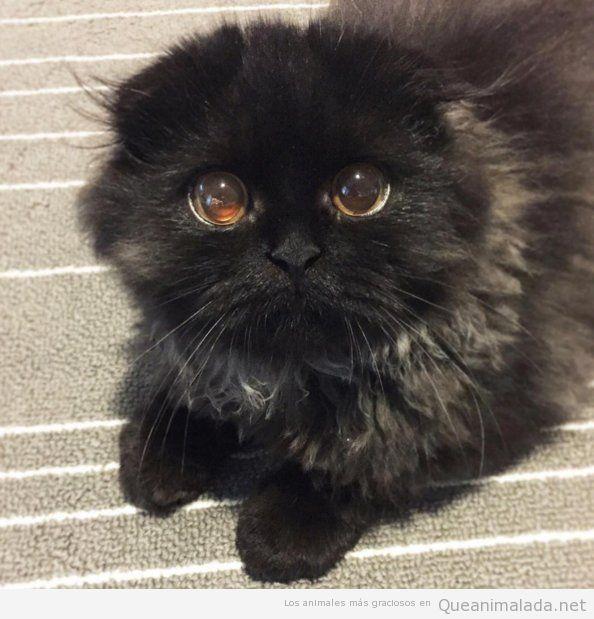 Foto bonita gato con ojos adorables 2