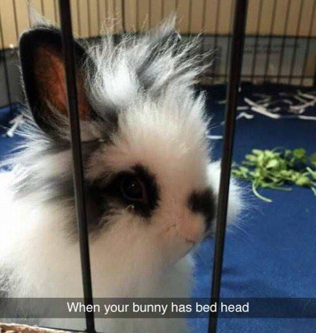 Tengo un conejo punki!