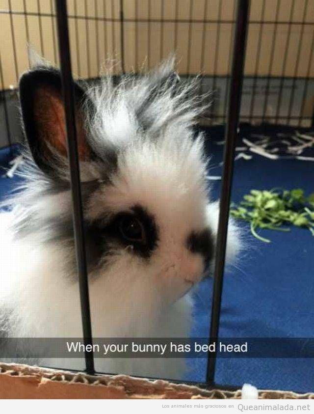 Foto graciosa conejo con el pelo despeinado