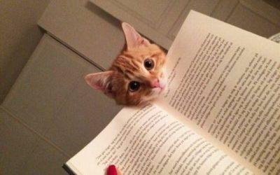 Hola! Qué lees?