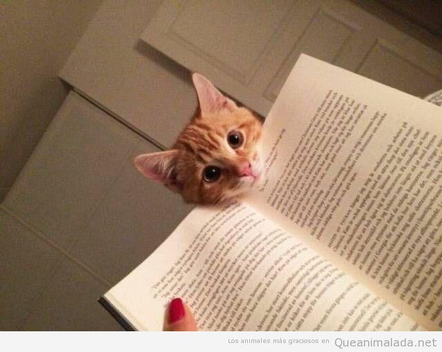 Foto graciosa gato asomado a un libro