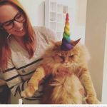 Qué feliz está tu gato unicornio, eh?