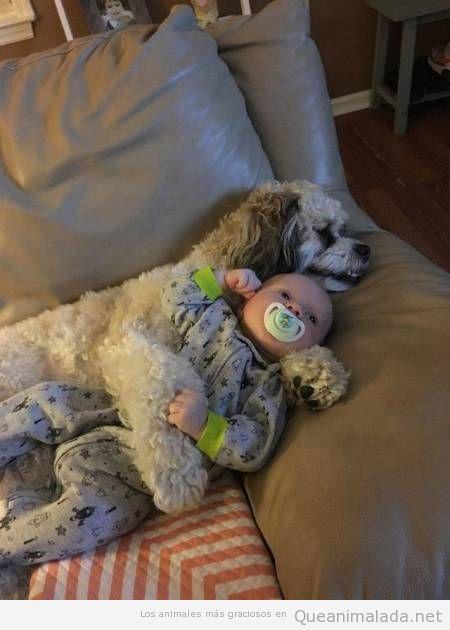 Por si no te había quedado claro que los perros son geniales cuidando de bebés