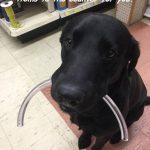 Este perro es el mejor empleado de ferretería que ha existido jamás!
