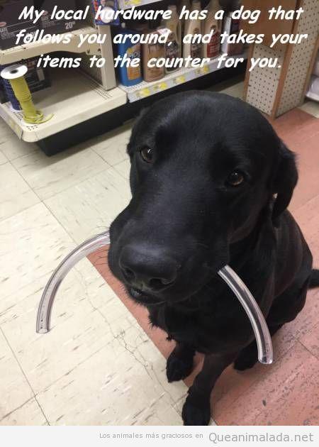 Foto graciosa de un perro que ayuda en una tienda