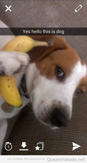 Foto graciosa perro llamando por teléfono con un plátano