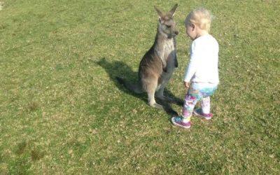 Cuando te haces amigo de una cría de canguro y no puedes parar de reír