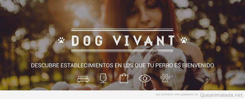 Dog Vivant 2