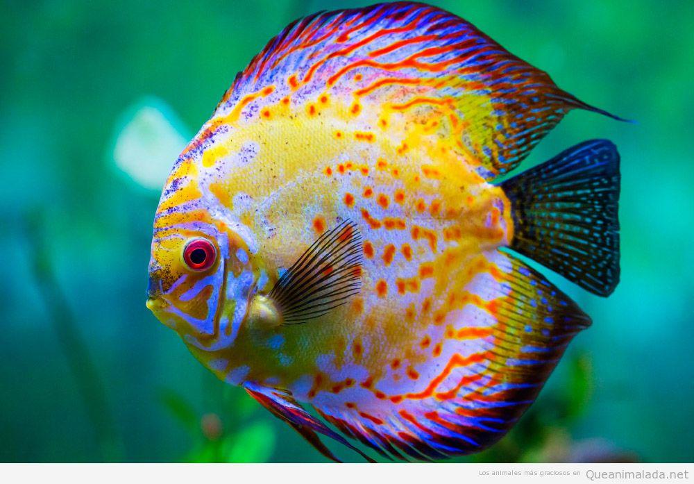 pez-disco (2)