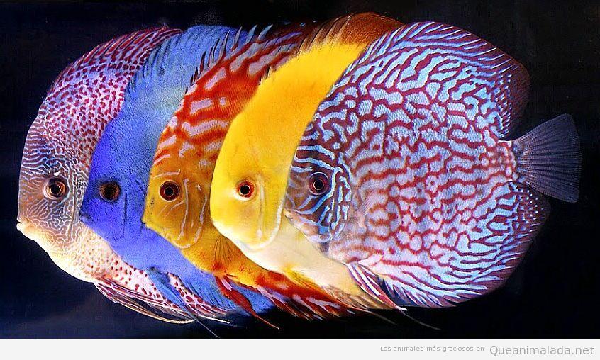 pez-disco (3)