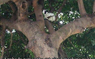 Cuidado! Ese gato va armado!