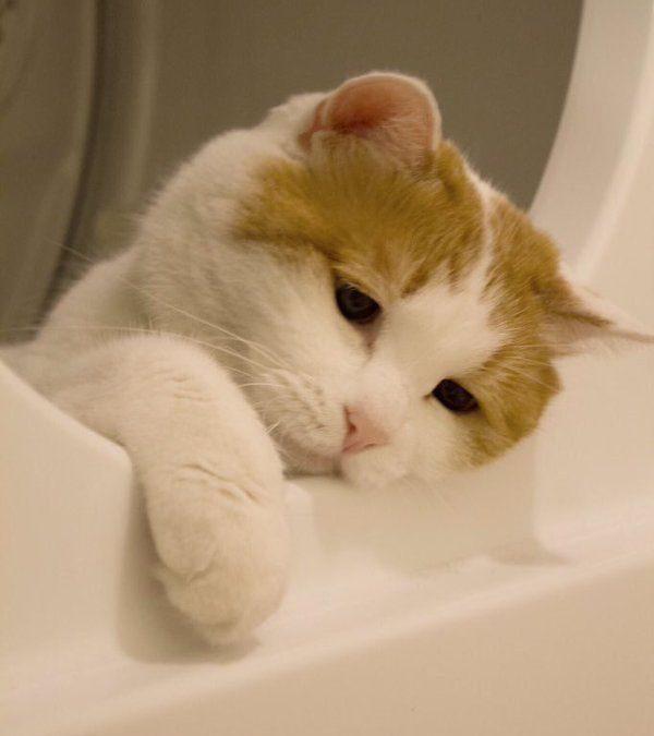 A veces me meto en la lavadora, pienso sobre la vida y me pongo melancólico…